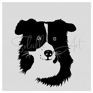 Border Collie Jess