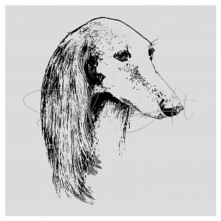 Saluki Sally